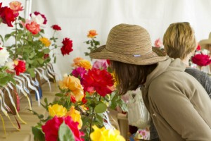 Coronado-Flower-Show3-640x427